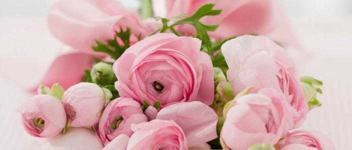 Rosafarbener Rosenstrauß